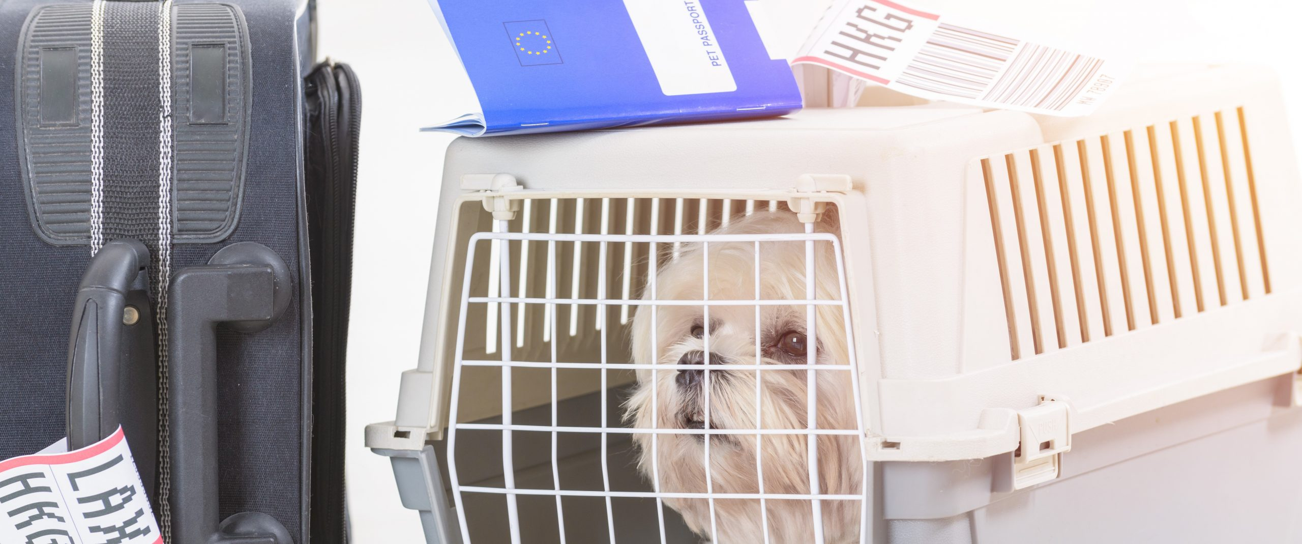 Things to Know Before Travelling with Pets: Part 1