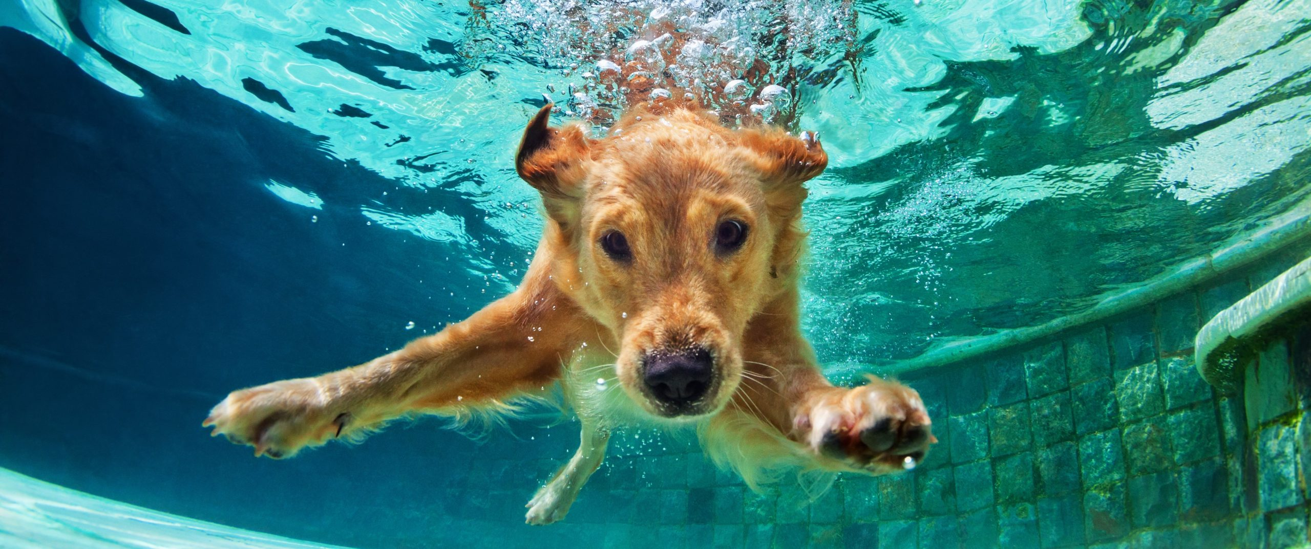 Teaching Your Dog How to Swim?  Here's What You Need to Know