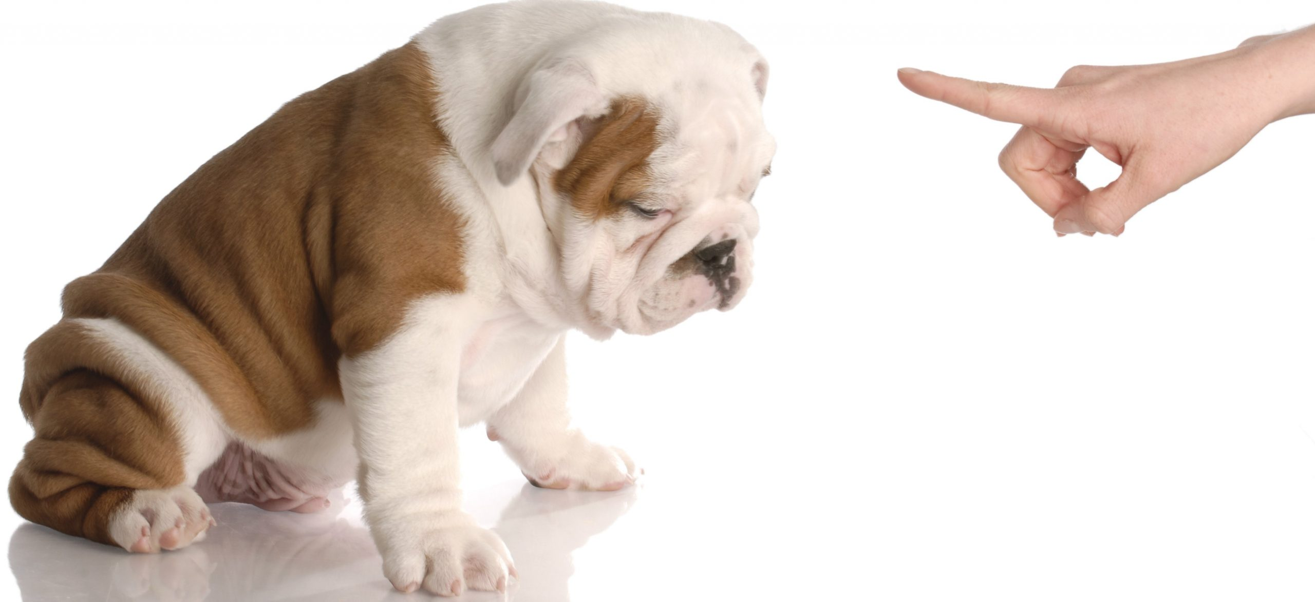 Potty Training your Pup!