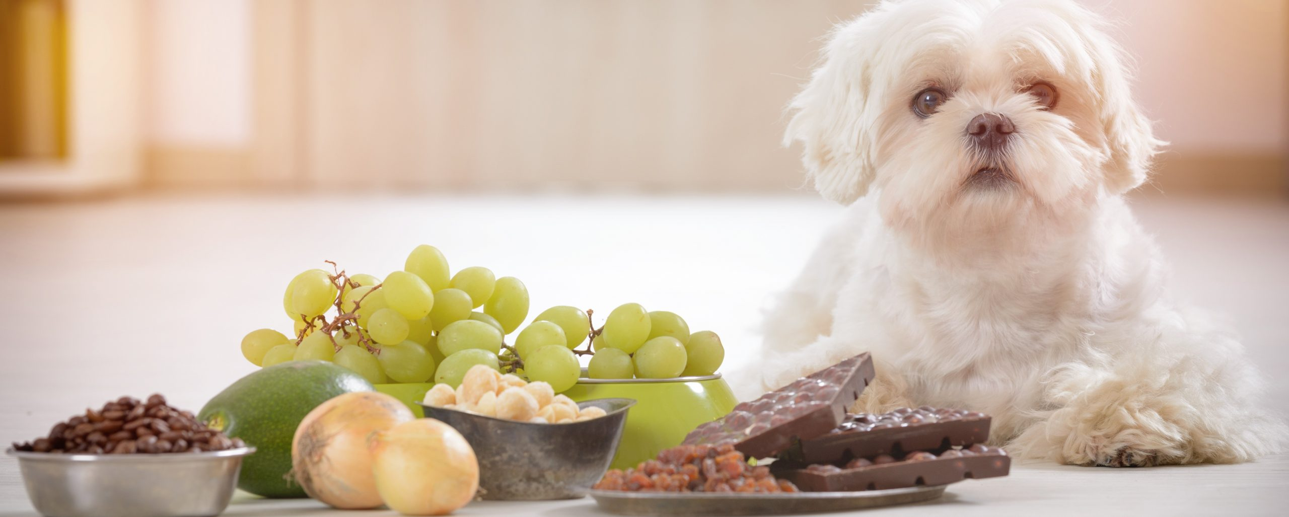 6 Harmful Foods to Never Feed Your Dog