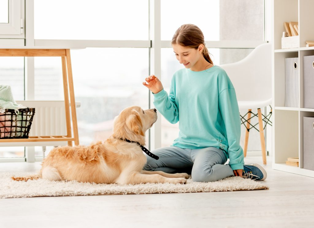 stop your dog from chewing