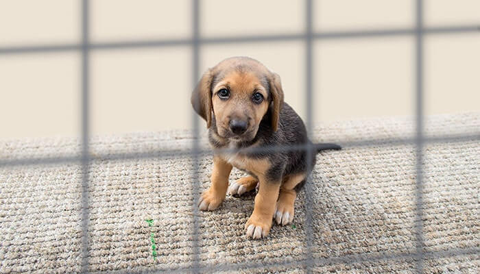 8 Reasons to Adopt a Pet from an Animal Shelter