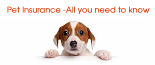 Pet Insurance Infographic – All You Need to Know