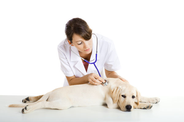 Pet Insurance launched!