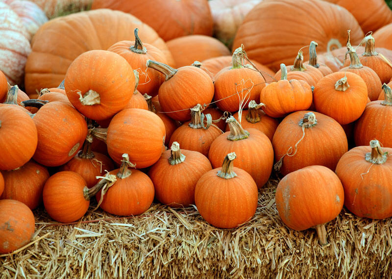 3 Healthy Pumpkin Recipes for Halloween